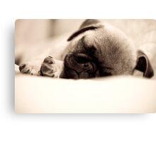 Sleeping Pug Canvas Print