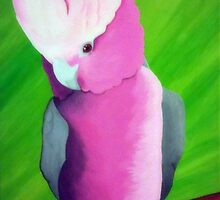 A Galah named Pinky by crigby