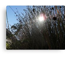 Sun Shining Through Reeds Canvas Print