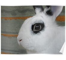 Rabbit Face Poster