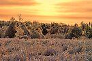 Sunset On Ice by Carolyn  Fletcher