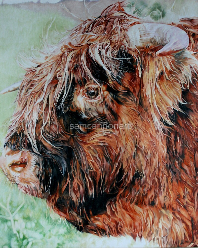The Highland Cow by samcannonart