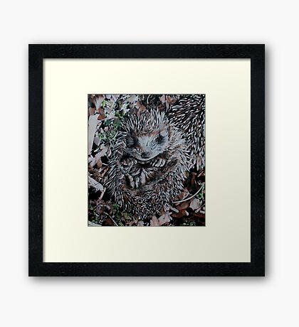 Hedgehog Sleeping Framed Print