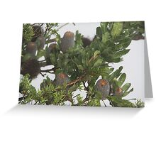 Wicked Banksia Greeting Card