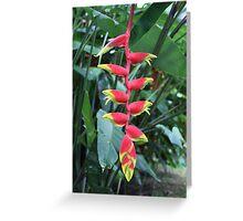 Botanic Flower - Singapore Greeting Card