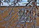 Icy Tree by Carolyn  Fletcher