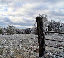 Icy Gate by Carolyn  Fletcher