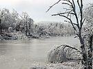 Bunny Creek Iced Over by Carolyn  Fletcher