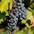 Grapes on the Vine by Lee Walters Photography
