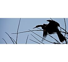 Anhingus Roost Photographic Print
