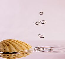Sea Shell with Bubbles by Riaan Roux