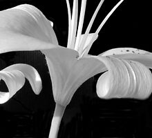 Lily Abstract by marybedy