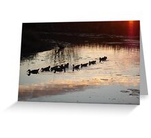 FOLLOW THE LEADER - MUSCOVY DUCKS AT SUNSET Greeting Card