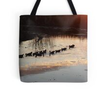 FOLLOW THE LEADER - MUSCOVY DUCKS AT SUNSET Tote Bag