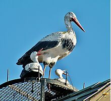 Storks on the Roof Photographic Print