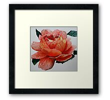 Peach Rose Framed Print
