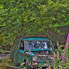Nature reclaiming car by Trevor Harley