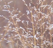 Delicate Prairie Grass by lorilee