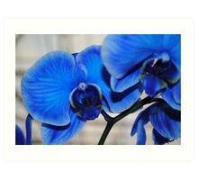 Bright Blue Orchids Art Print