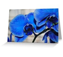 Bright Blue Orchids Greeting Card
