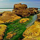 Sea  Weed. by Julie  White