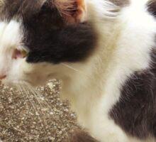 Mama Cat Sticker