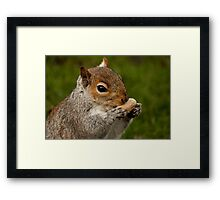 Grey Squirrel Framed Print
