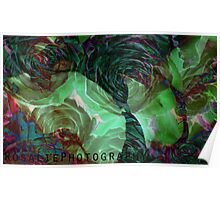 underwater rose Poster