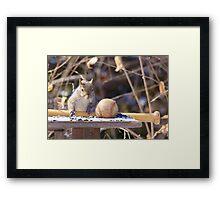 Squirrel baseball and bat Framed Print