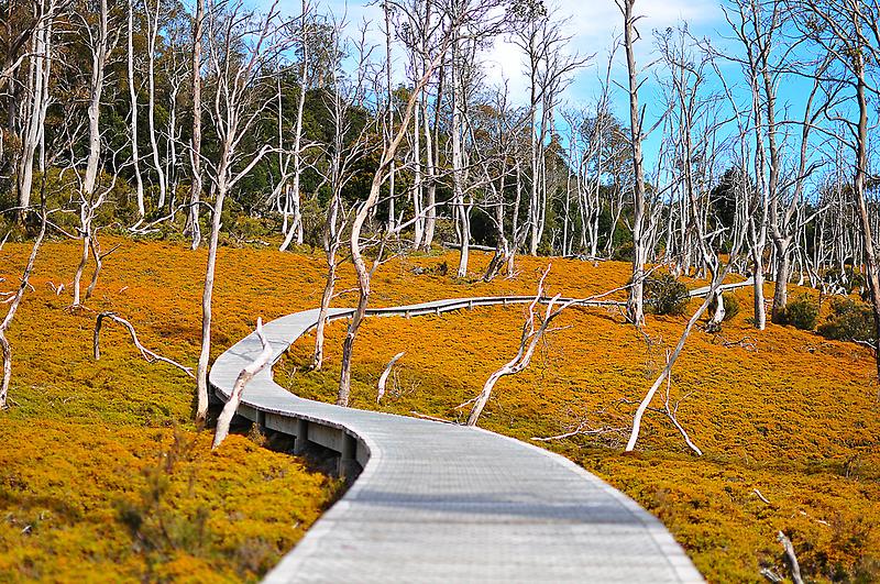 Ronny Creek Boardwalk by K Futol