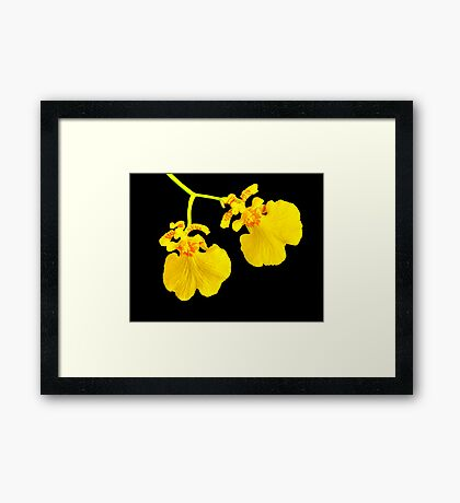 Twin Orchid Blooms Framed Print