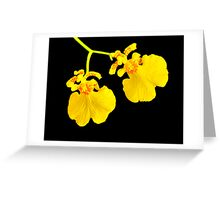 Twin Orchid Blooms Greeting Card