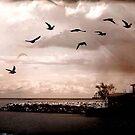 Birds © by Dawn M. Becker
