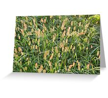 The Red and Gold of Grass Greeting Card