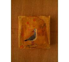 Lone Gull Photographic Print