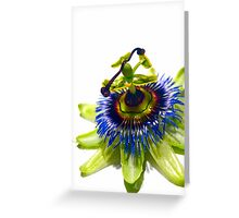 Australian flowers #2: Passion Greeting Card