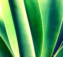 green by Kip Stewart