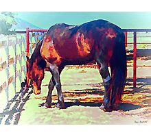 Corraled Horse Photographic Print