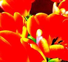 Red by Kip Stewart