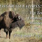 Banner for Top Ten Challenge Winner Even-toed Ungulates by Eve Parry