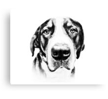 Swiss Mountain Dog Canvas Print