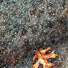 Floating on Thin Ice by Beth Mason