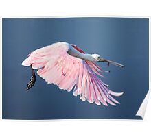 Roseate Spoonbill In Flight At Water's Surface Poster