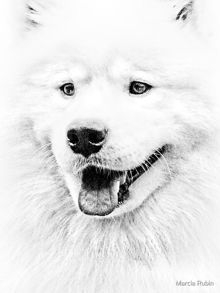 Samoyed by Marcia Rubin