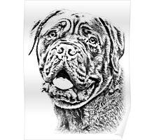 Dogue De Bordeaux Poster