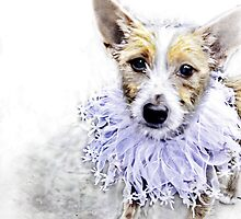 Wire Haired Jack Russell Terrier by Marcia Rubin
