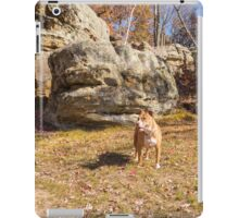 Shelby at Ship Rock iPad Case/Skin