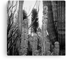 Cactus Medley Canvas Print