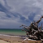 Somers Beach by wolfmarx