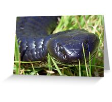There's a snake lurking in the grass... Greeting Card